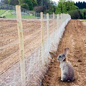 How To Keep Rabbits Out Of Garden Best Expert Tips Every Gardener Must Know