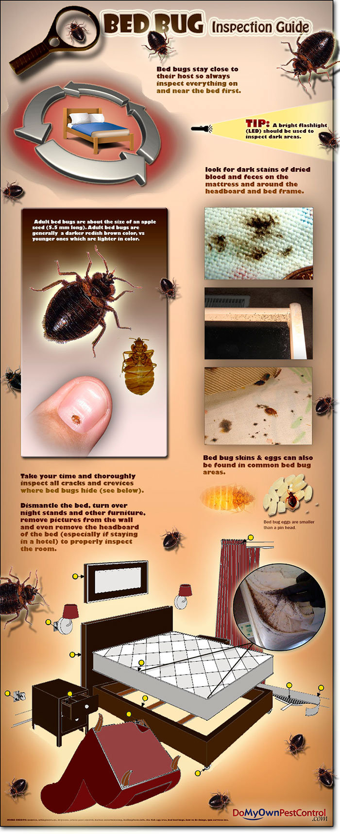 Bed bug inspectation guide