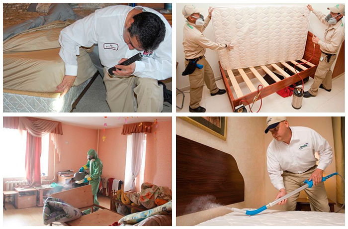 Bed bugs services collage