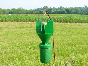 Japanese beetles trap
