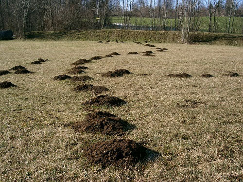 "Moles: Their main ""highways"""