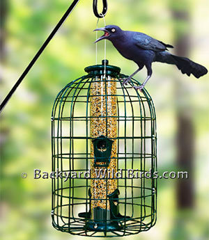 Grackle Proof Bird Feeder
