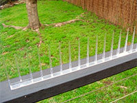Bird spikes in your garden