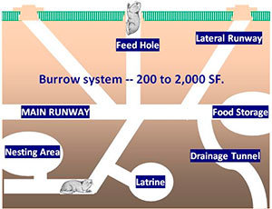 Gopher's burrow system
