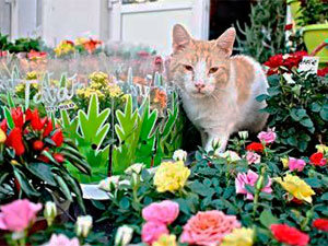 Cat in your garden