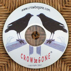 CROW be GONE sound
