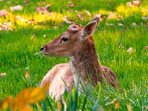 How to Keep Deer out of Garden Working Deer Control Methods You