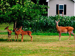 Deter deer out from garden