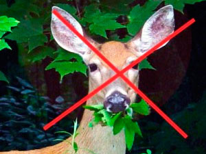 Deer repellent products to keep them away from your garden