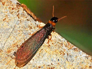 Awesome Termite Control Information on How to Get Rid of Termites You Need to Know