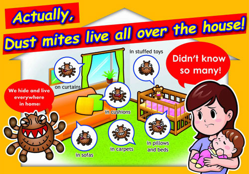 Surprising Information About Dust Mite Bites Truth Or Myth