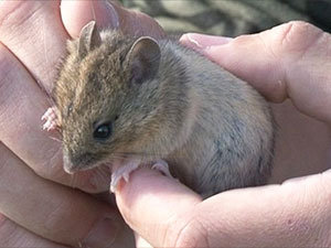 Field mouse control tips