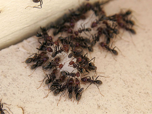 Charming How To Get Rid Of Ants In The House Preventive Measures Take