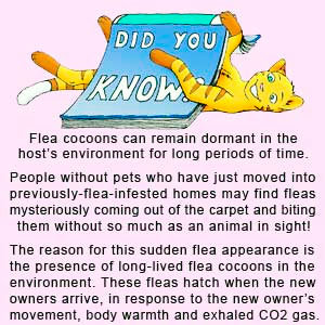 How to kill fleas in the house best ways tips and products to make away with nasty insects - Home remedies to keep fleas away ...