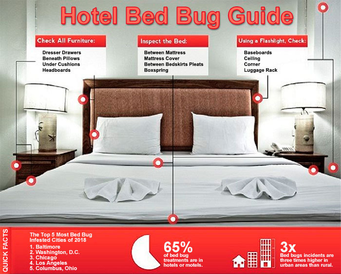 Hotel Bed Bug Guide