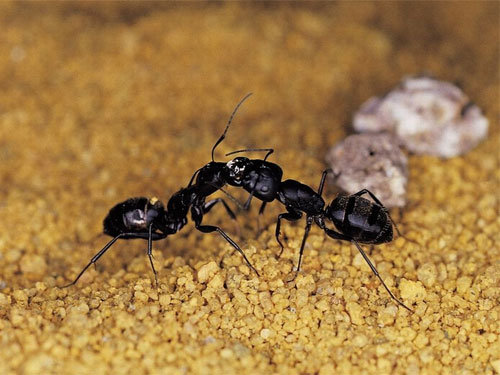How To Get Rid Of Ants In The House Preventive Measures