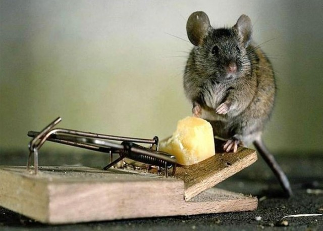 How to Get Rid of Mice: 7 Ways to Oust Impudent Rodents from Your Territory