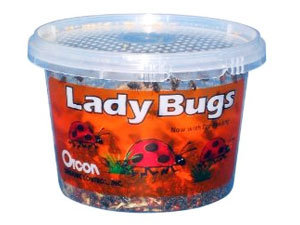 Lady Bugs by Orcon