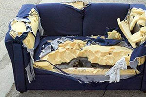 Mice inside couch