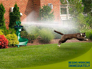 Best Cat Deterrent Solutions to Deter Cats from Your Lawn