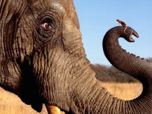 Mouse and elephant