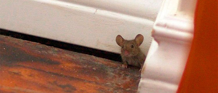 Mouse in gap