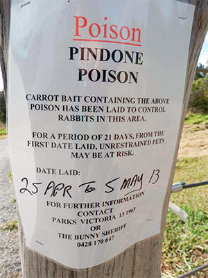 Pindone poison