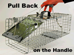 Pull Back on the Handle