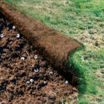 Tips on Removing Japanese Beetle Lawn Grubs