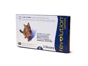 Make Your Cat Or Dog Ear Mites Free How To Get Rid Of Ear