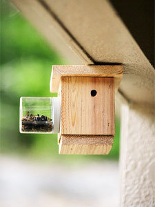 Carpenter Bee Traps Tricks For Fast Insects Elimination