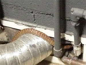 Getting rid of snakes around the house