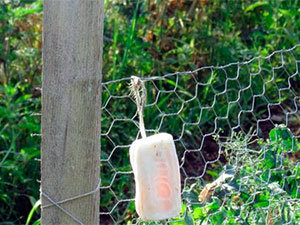 Soap on fence