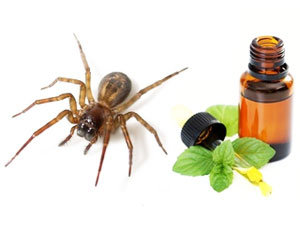 The best natural repellent for spiders control