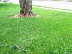 Install motion-activated sprinklers