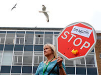 Stop seagull problems