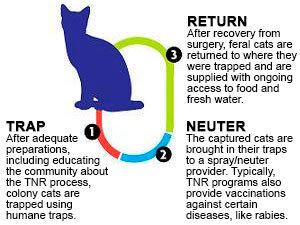 TNR program scheme