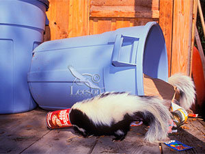 Skunks control methods: reduce attractants