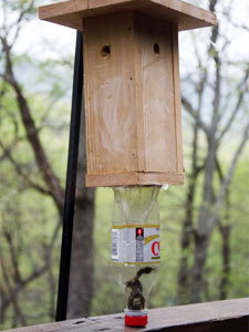 One of caprenter bee trap's plan